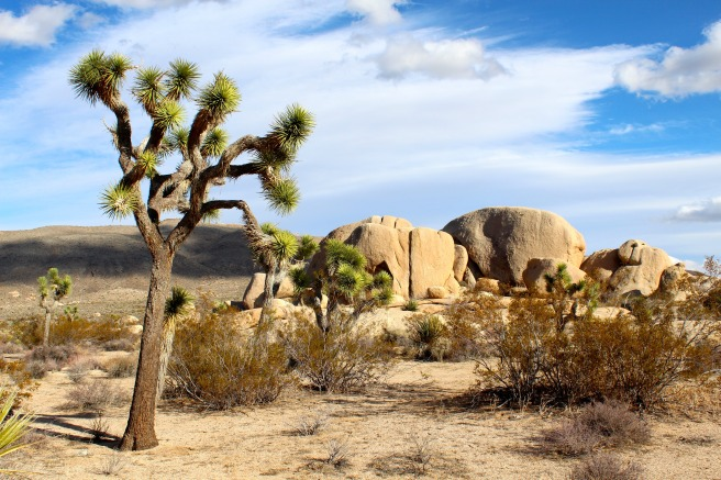joshua-tree-national-park-mojave-desert-rocks-landscape-73820